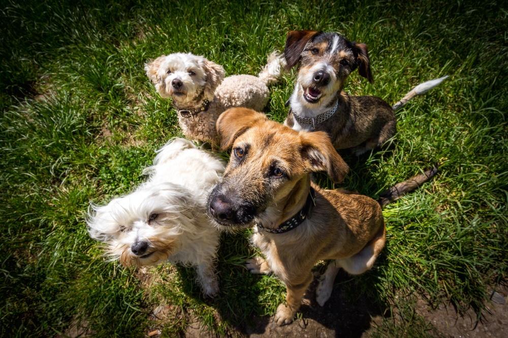Assicurazione sul cane: cosa copre e quanto costa
